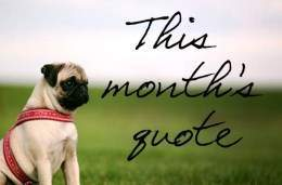 Pug dog quote