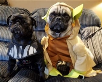 pugs-dressed-up-in-costumes