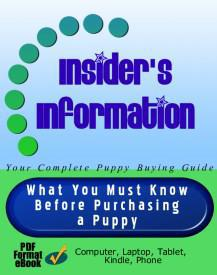 Pug puppy buying guide