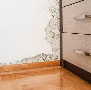 Bat Water Damage Repair Mold On Wall In Goshen
