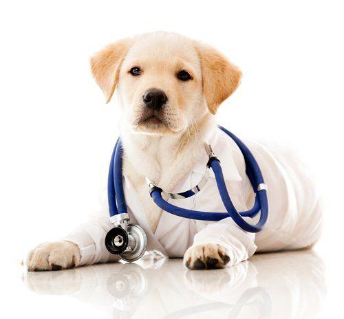 cane a clinica veterinaria