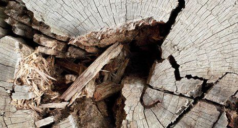 wood work repair