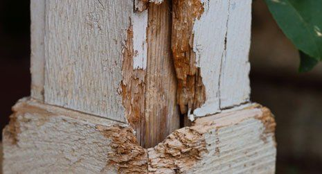 dry rot treatments