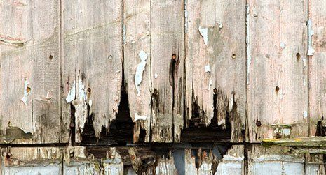 wood work damp proofing