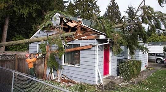 Tree Removal Services In Lynnwood Wa