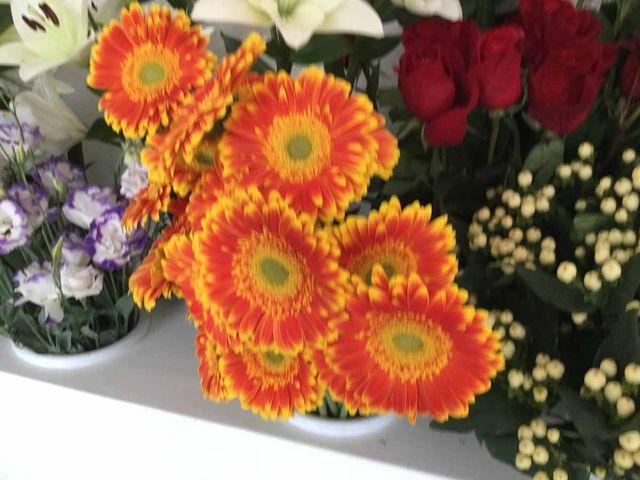 Bella pianta piena di boccioli di fiori bianche e avvolta in carta arancione