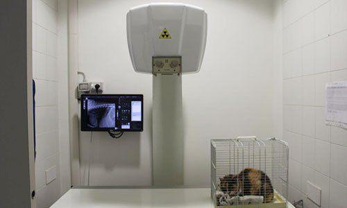 un gatto in una gabbietta e dei macchinari diagnostici accanto