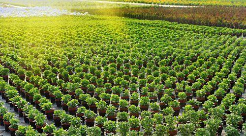 piante in vaso in vivaio