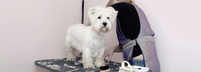 Mobile Dog Grooming Middlesbrough