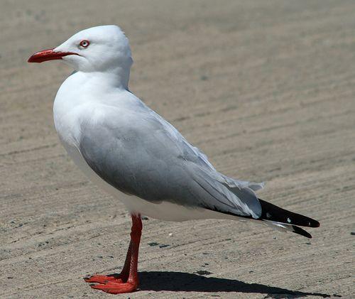 Bird Birds Control