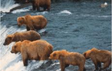 viaggi naturalistici in canada