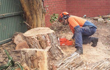 all tree and stump removal man cutting stump with chainsaw