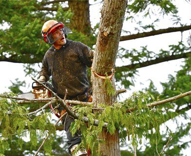 all tree and stump removal tree topper in action