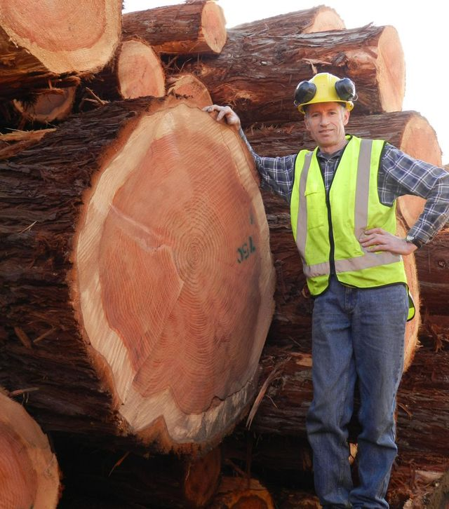 Logs used for architectural timber in Nelson