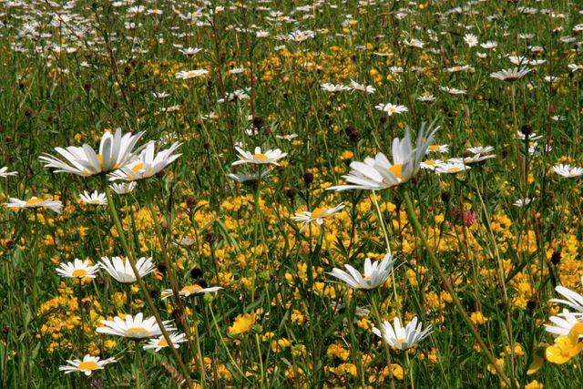 Sussex gardens