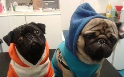 veterinaria cani