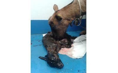 servizio veterinario