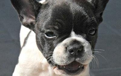 veterinaria cane