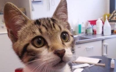 servizi veterinari gatti