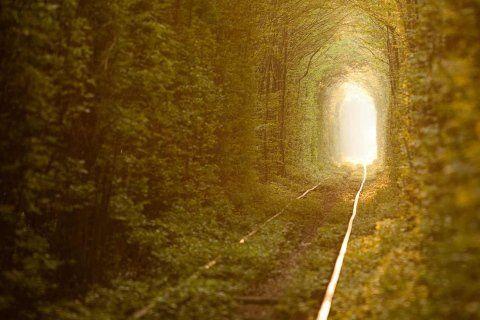 galleria di alberi con porta illuminata in fondo