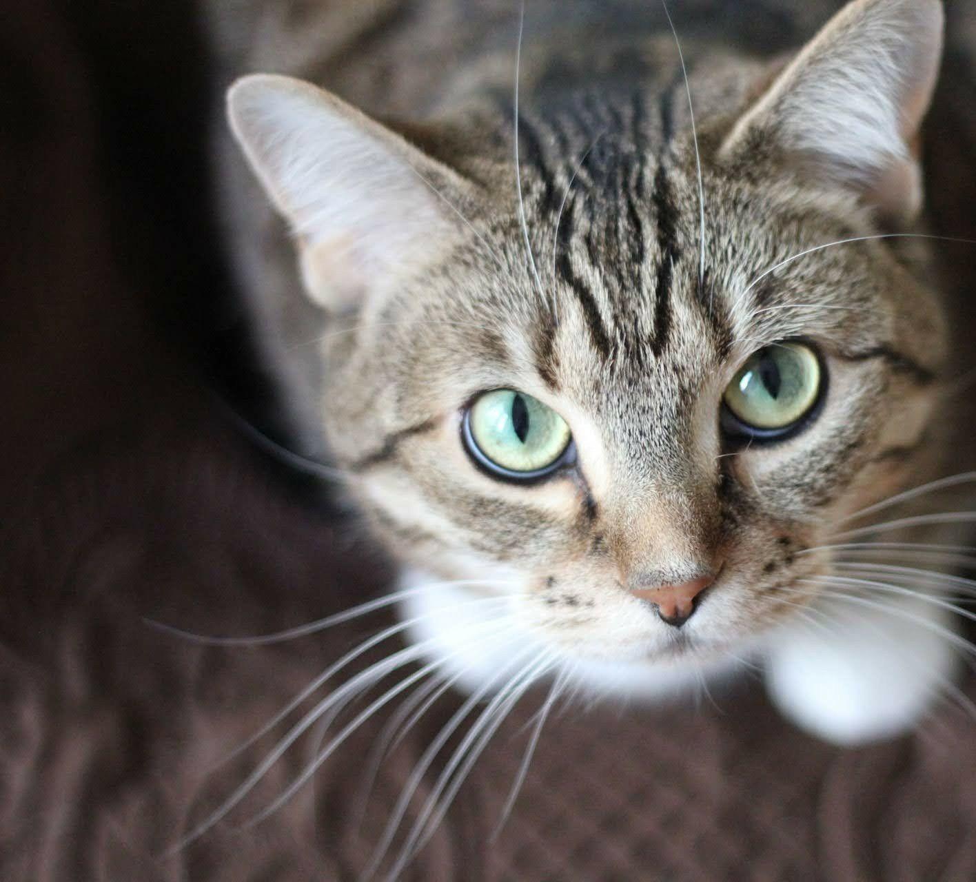 Domestic Cat — Lorton, VA — Fairfax Transfer and Storage Inc.