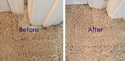 sun patch carpet cleaning