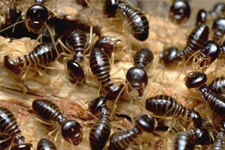From Termite Inspections To Removal Our Pest Control Experts Can Help