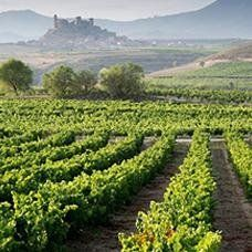 vivaismo Toscana