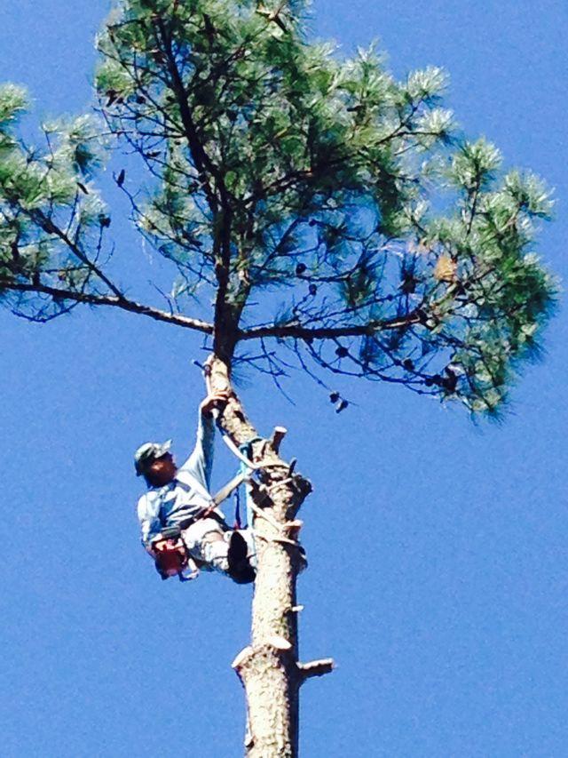 Tree Removal Augusta GA Bill Harley Company