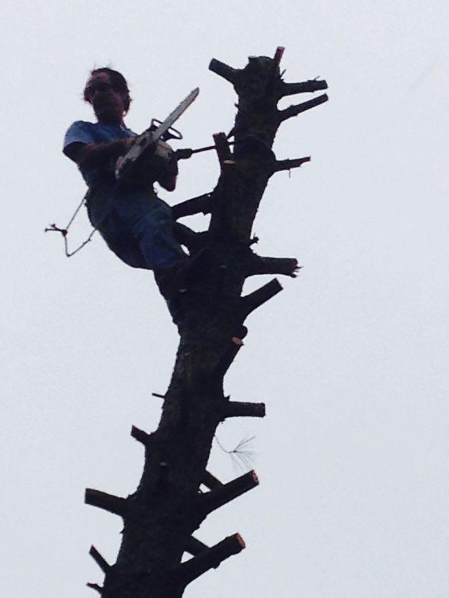 Tree Services Augusta GA Bill Harley Company