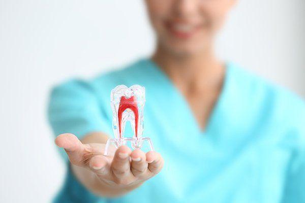 La giovane femmina dentista in possesso di modello dente
