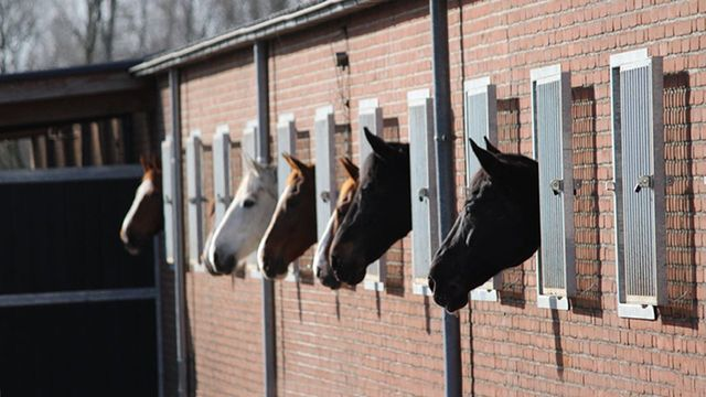 Paardenpension Eindhoven bij de EEPM stallen