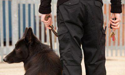 dog security