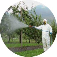 Man spraying tree with chemicals