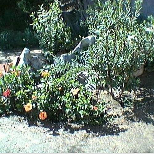 delle piante in un giardino