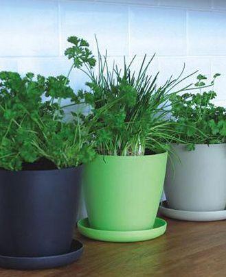 Eco friendly pots