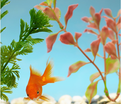 pesce acqua dolce
