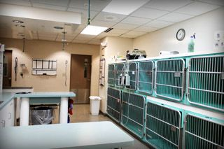 veterinary clinic Lancaster, NY