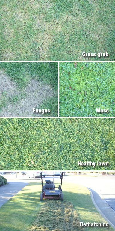 Garden services in Christchurch can help with different types of grass