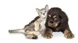 medico veterinario, oculistica veterinaria