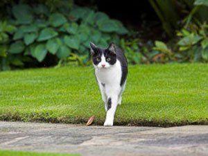 a cat walking in the garden
