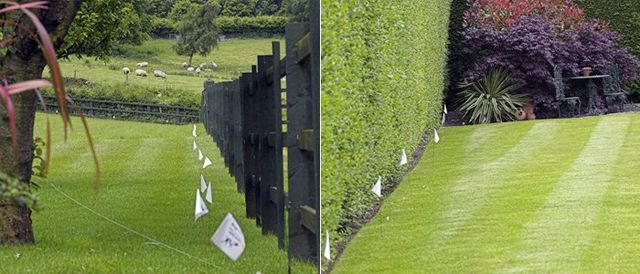 Invisible cat fence