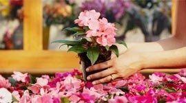 servizi floreali per ristoranti