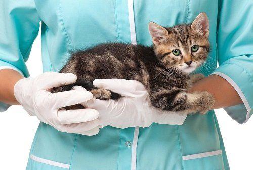 una veterinaria con in braccio un gattino