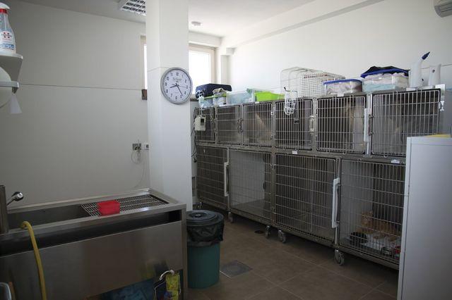 Cane alla Clinica Veterinaria Il Falco a Follonica, GR