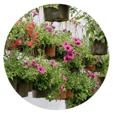 vendita piante, piante per esterno, piante da balcone