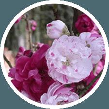 vendita fiori, piante da esterno, piante con fiori