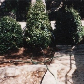 realizzazione giardini, piantumazione camelie, piantumazione alberelli