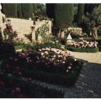 rose classiche, rose antiche, rose bianche