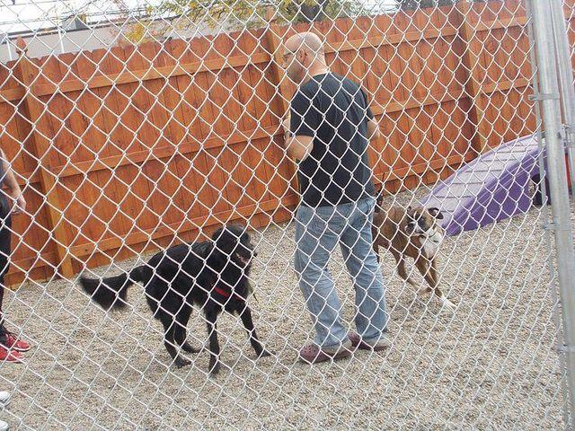 Dog Daycare Buffalo, NY